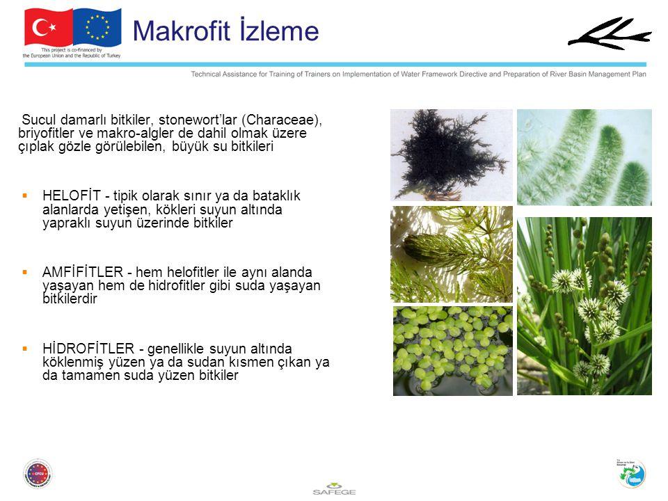 Makrofit İzleme Sucul damarlı bitkiler, stonewort'lar (Characeae), briyofitler ve makro-algler de dahil olmak üzere çıplak gözle görülebilen, büyük su