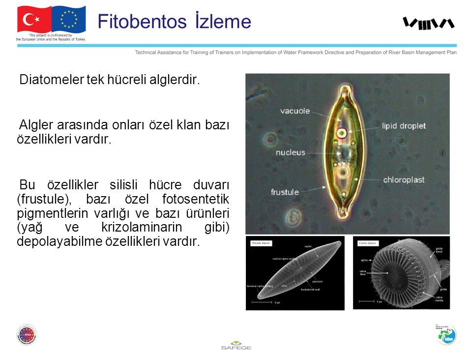 Fitobentos İzleme Diatomeler tek hücreli alglerdir. Algler arasında onları özel klan bazı özellikleri vardır. Bu özellikler silisli hücre duvarı (frus