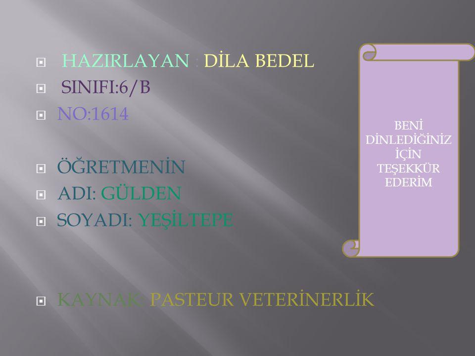  HAZIRLAYAN : DİLA BEDEL  SINIFI:6/B  NO:1614  ÖĞRETMENİN  ADI: GÜLDEN  SOYADI: YEŞİLTEPE  KAYNAK: PASTEUR VETERİNERLİK BENİ DİNLEDİĞİNİZ İÇİN