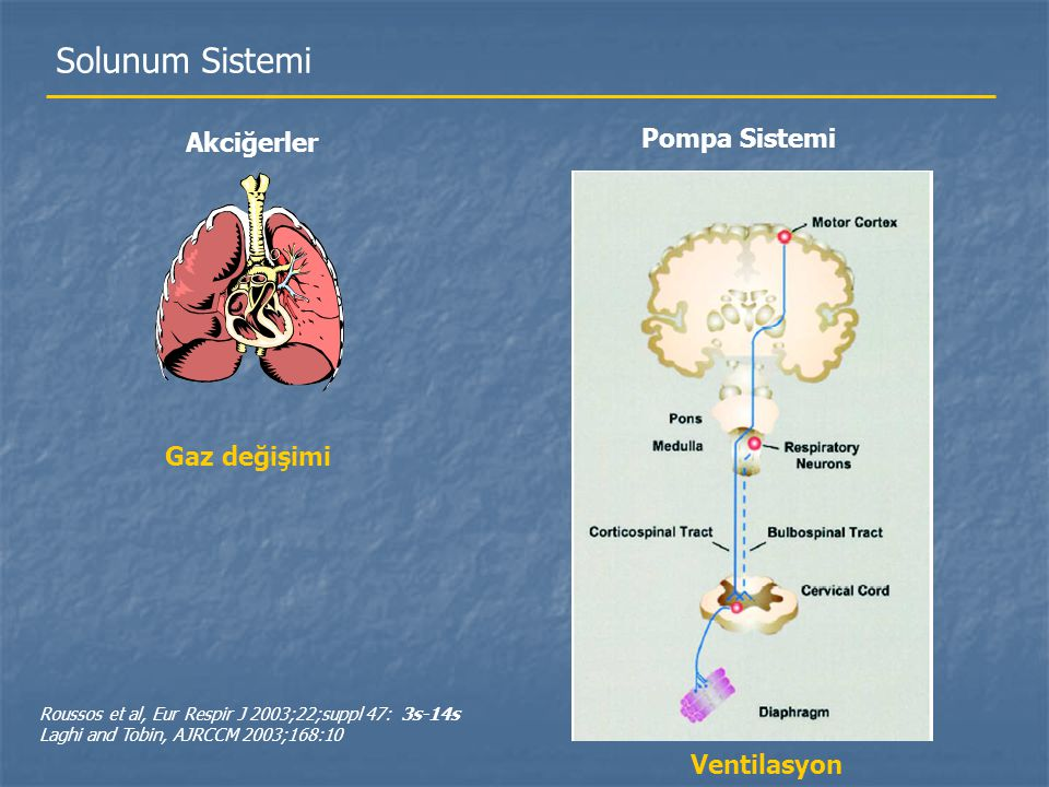 Solunum Sistemi Akciğerler Pompa Sistemi Gaz değişimi Ventilasyon Roussos et al, Eur Respir J 2003;22;suppl 47: 3s-14s Laghi and Tobin, AJRCCM 2003;16