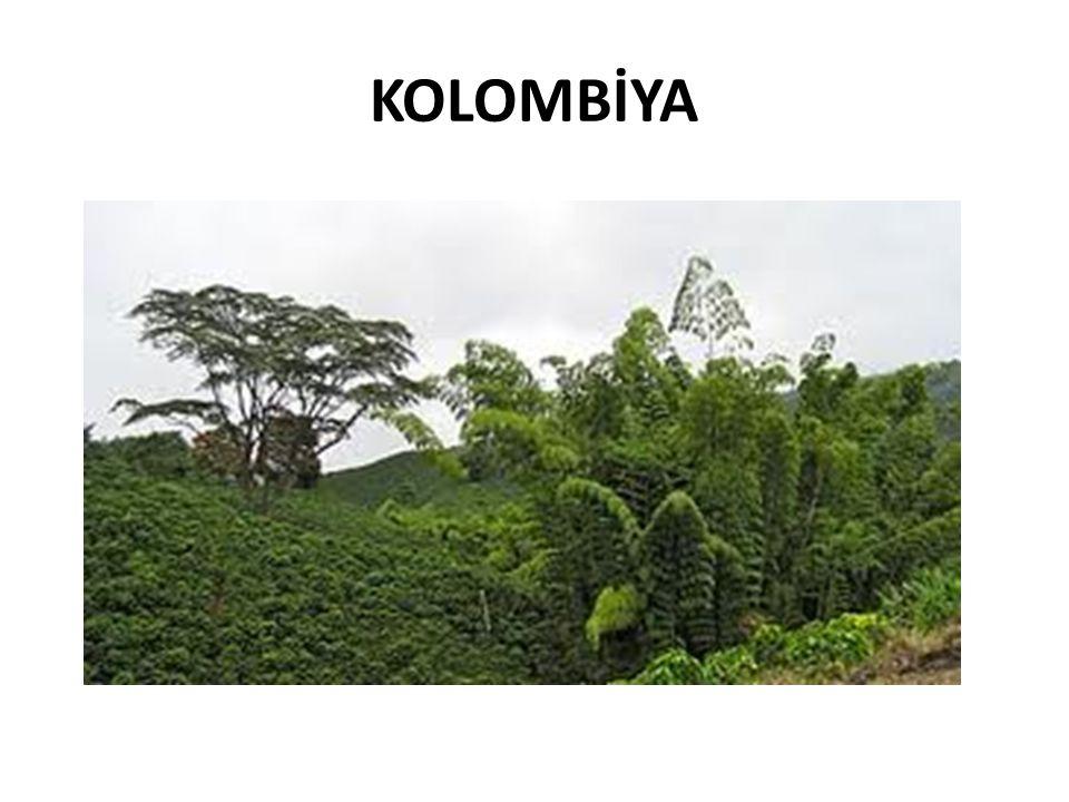 KOLOMBİYA