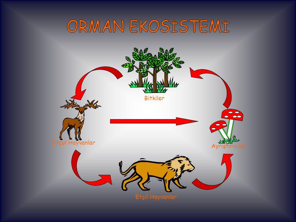 Bitkiler Otçul Hayvanlar Etçil Hayvanlar Ayrıştırıcılar