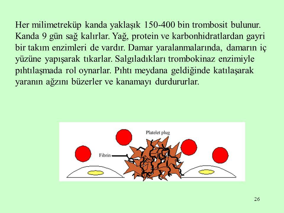 26 Her milimetreküp kanda yaklaşık 150-400 bin trombosit bulunur. Kanda 9 gün sağ kalırlar. Yağ, protein ve karbonhidratlardan gayri bir takım enzimle