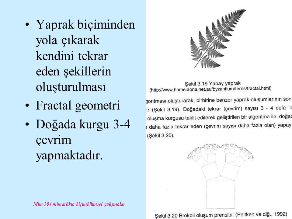 Mim 384 mimarlıkta biçimbilimsel çalışmalar Yaprak biçiminden yola çıkarak kendini tekrar eden şekillerin oluşturulması Fractal geometri Doğada kurgu 3-4 çevrim yapmaktadır.