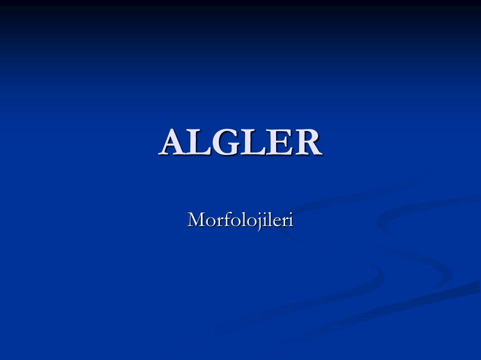 ALGLER Morfolojileri