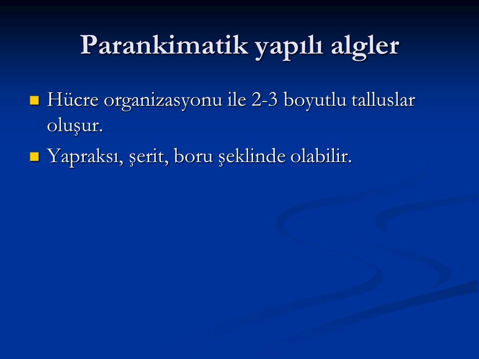 Parankimatik yapılı algler Hücre organizasyonu ile 2-3 boyutlu talluslar oluşur. Hücre organizasyonu ile 2-3 boyutlu talluslar oluşur. Yapraksı, şerit