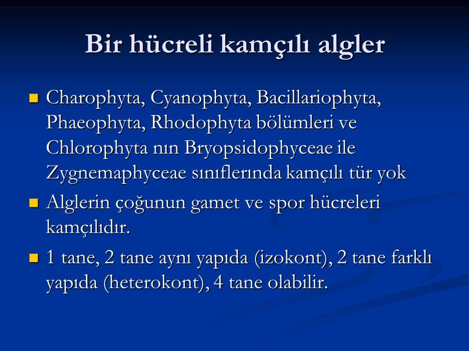 Bir hücreli kamçılı algler Charophyta, Cyanophyta, Bacillariophyta, Phaeophyta, Rhodophyta bölümleri ve Chlorophyta nın Bryopsidophyceae ile Zygnemaph