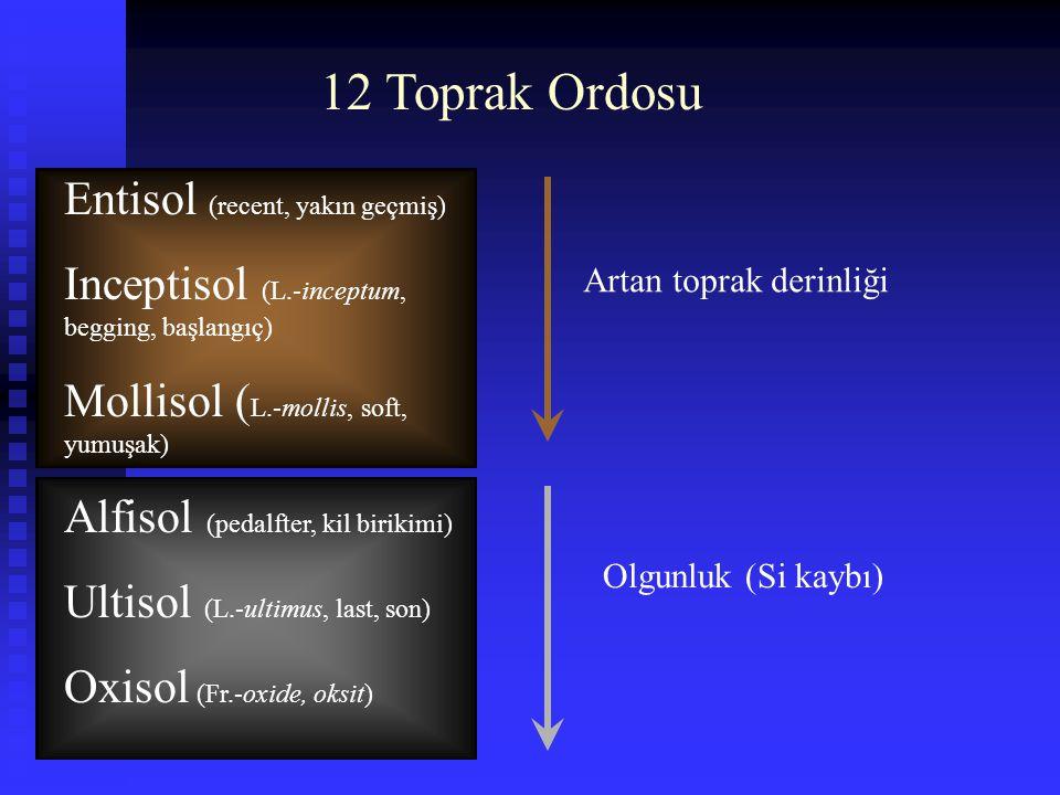 12 Toprak Ordosu Entisol (recent, yakın geçmiş) Inceptisol (L.-inceptum, begging, başlangıç) Mollisol ( L.-mollis, soft, yumuşak) Alfisol (pedalfter,