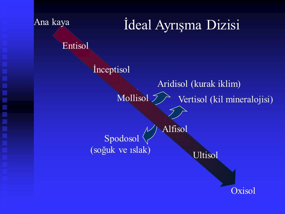 Ana kaya Entisol İnceptisol Alfisol Ultisol Oxisol Mollisol Spodosol (soğuk ve ıslak) Aridisol (kurak iklim) Vertisol (kil mineralojisi) İdeal Ayrışma