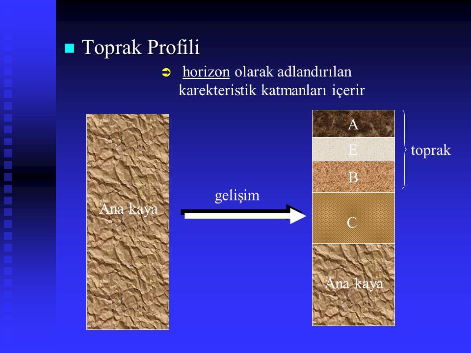 n Toprak Profili  horizon olarak adlandırılan karekteristik katmanları içerir A E B C Ana kaya toprak gelişim