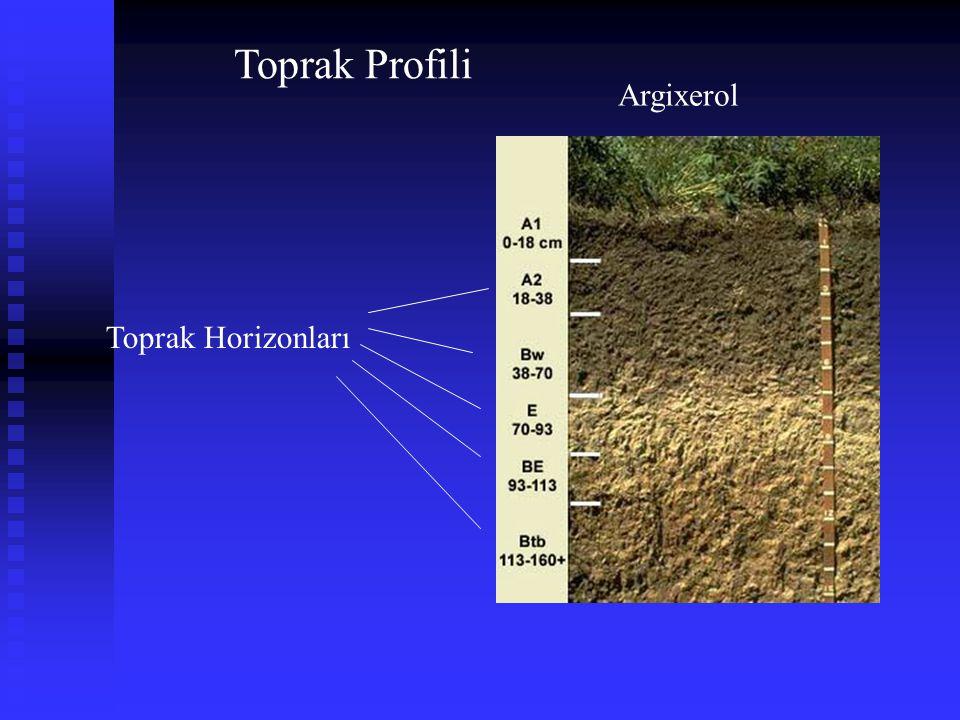 Toprak Horizonları Argixerol Toprak Profili