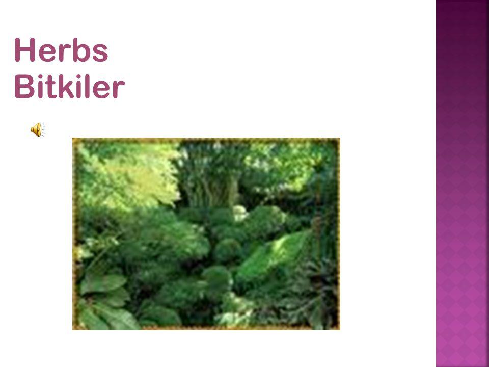 Herbs Bitkiler
