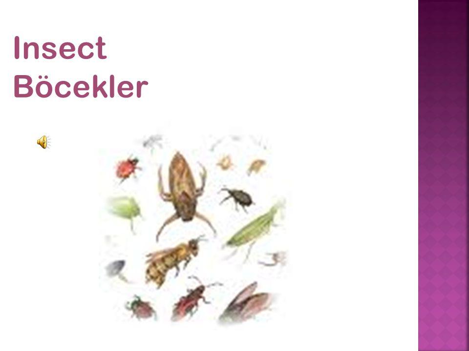 Insect Böcekler