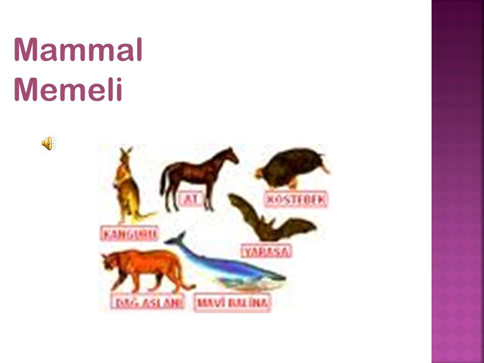 Mammal Memeli