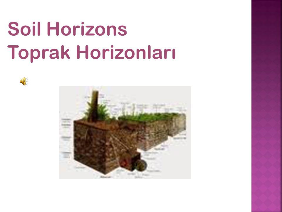 Soil Horizons Toprak Horizonları
