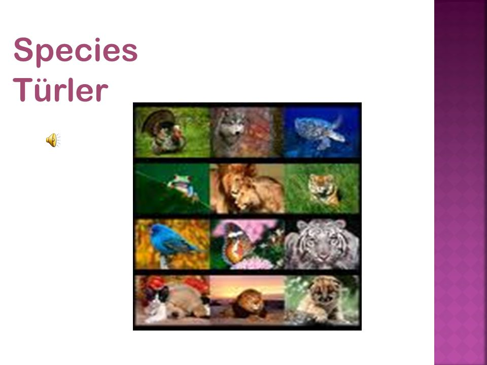 Species Türler