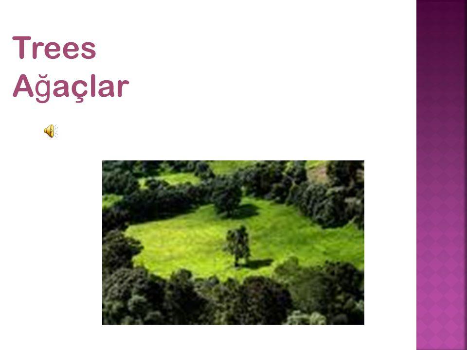 Trees A ğ açlar