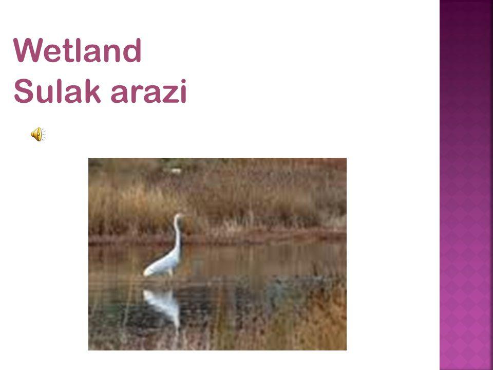Wetland Sulak arazi