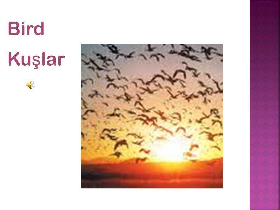 Bird Ku ş lar