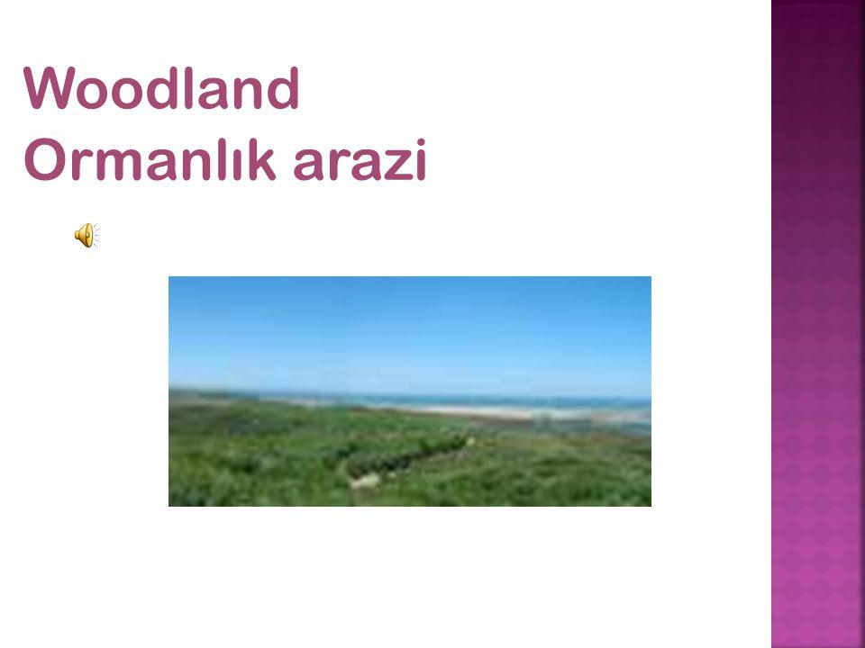 Woodland Ormanlık arazi