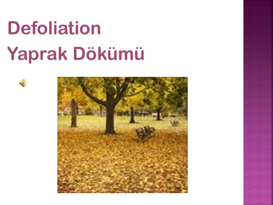 Defoliation Yaprak Dökümü