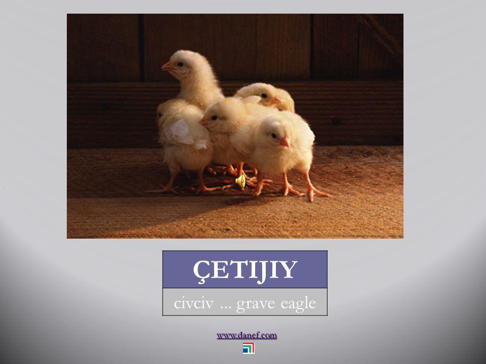 www.danef.com KIW kuğu... swan