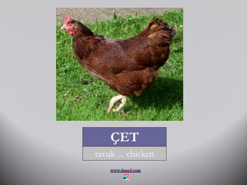 www.danef.com ÇETIJIY civciv... grave eagle