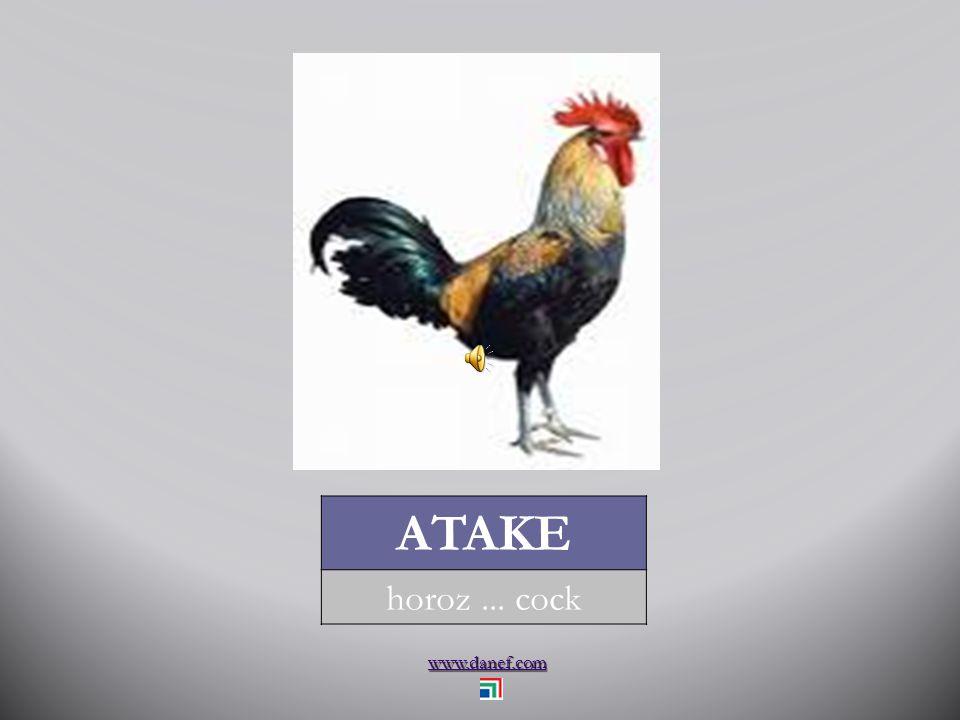 www.danef.com ÇET tavuk... chicken