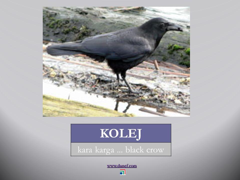 www.danef.com KIYAK akbaba... grave eagle