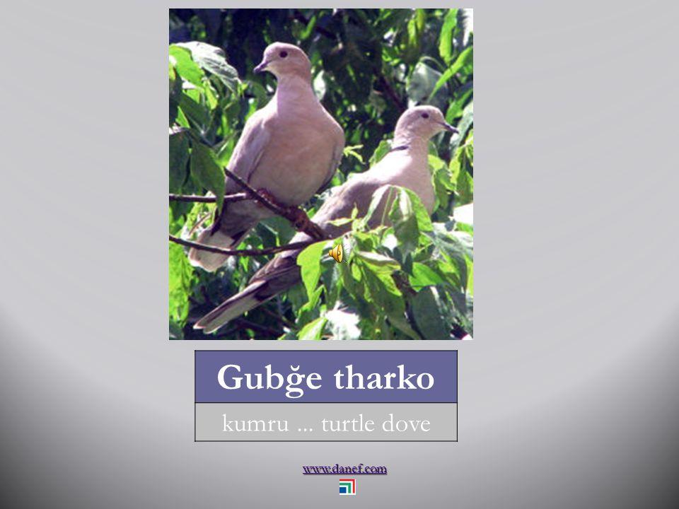 www.danef.com THAÇET hindi... turkey