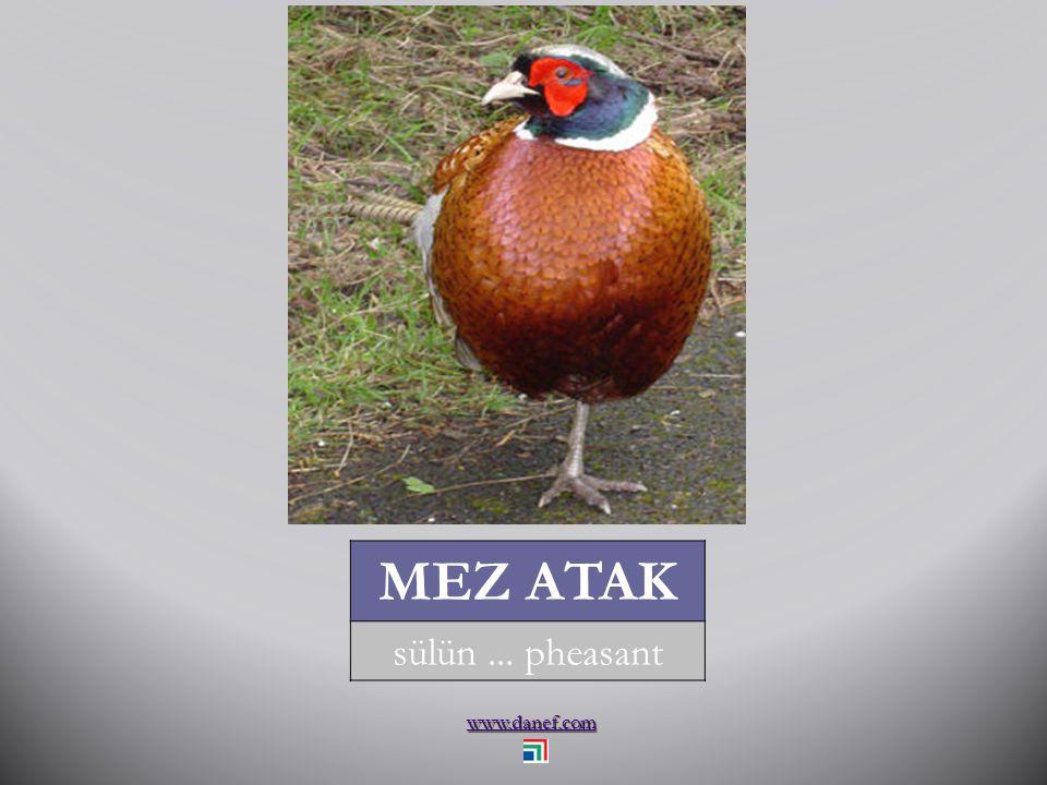 www.danef.com ME Ḱ U Ṕ E ÇET bıldırcın... landrail