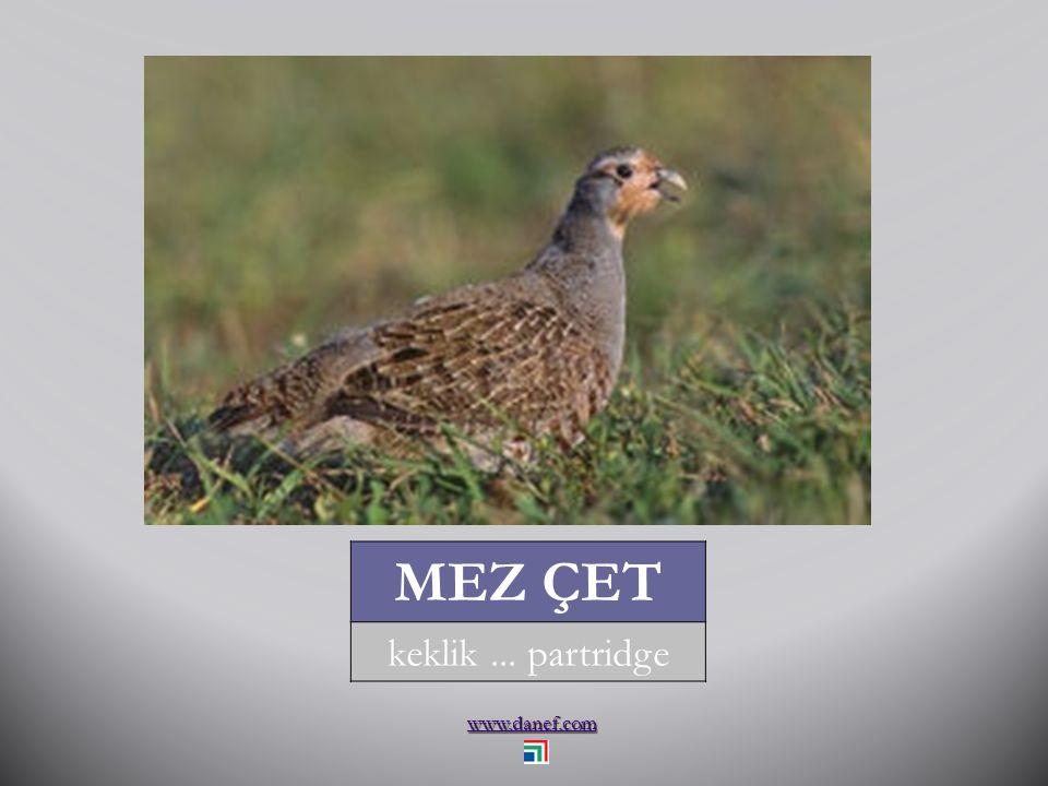 www.danef.com MEZ ATAK sülün... pheasant