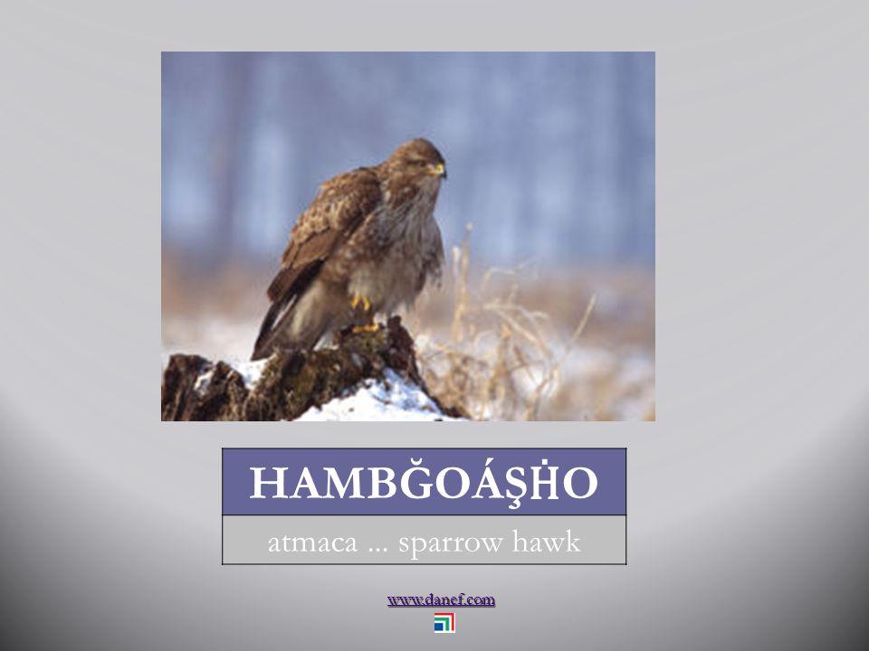 www.danef.com PÇENDO Ḣ sığırcık... starling