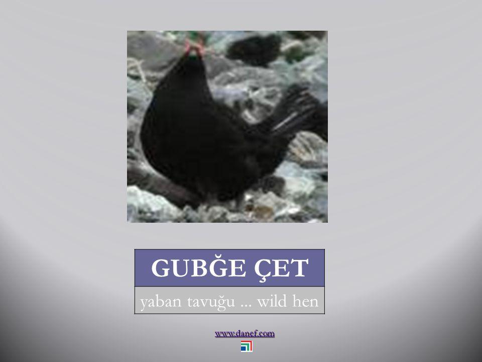 www.danef.com GUŞEI`BZIW papağan... parrot
