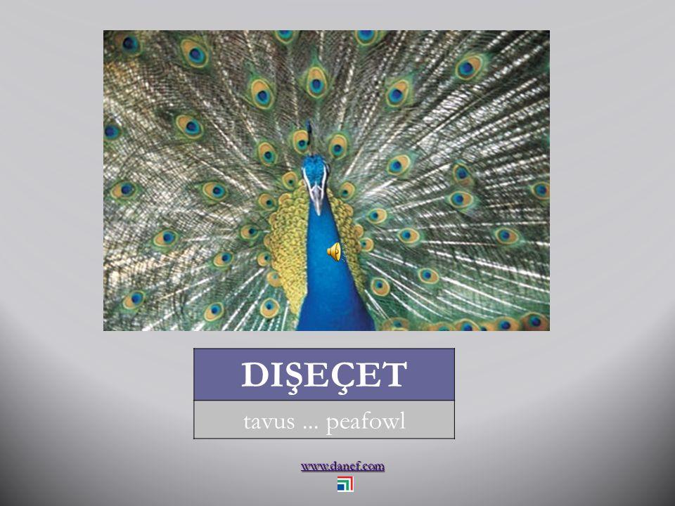 www.danef.com KAZ kaz... goose