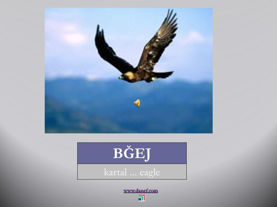 www.danef.com BĞEJ kartal... eagle