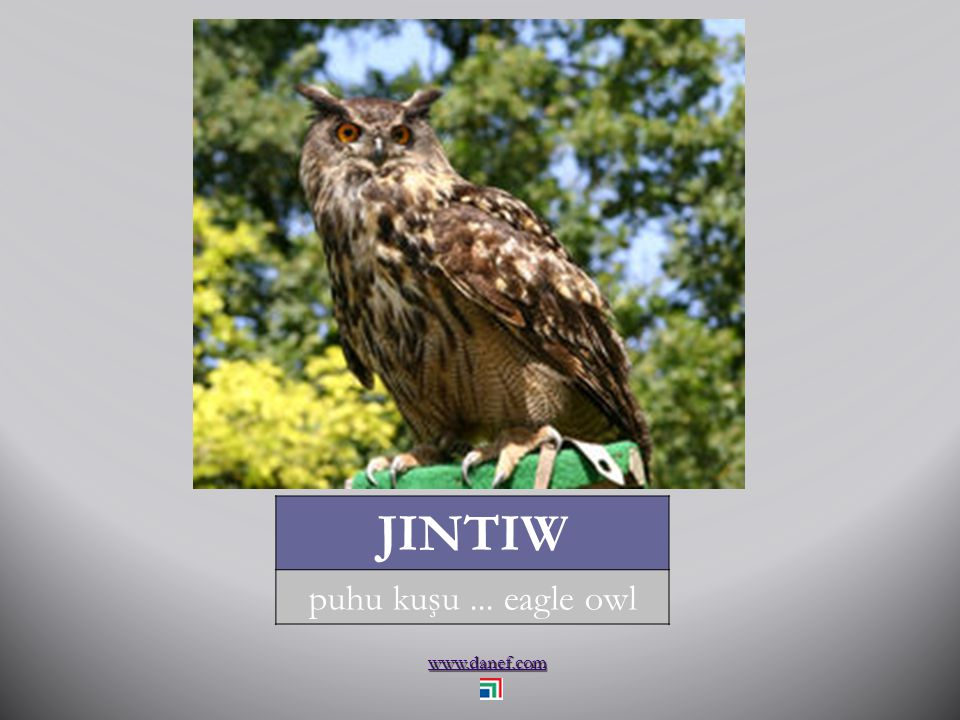 www.danef.com JINTIW puhu kuşu... eagle owl