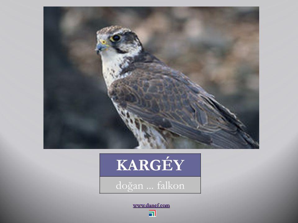 www.danef.com KANCI saksağan... magpie