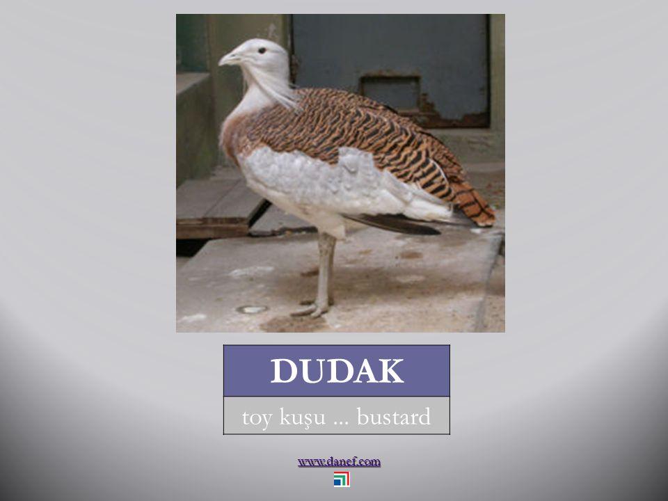 www.danef.com DUDAK toy kuşu... bustard