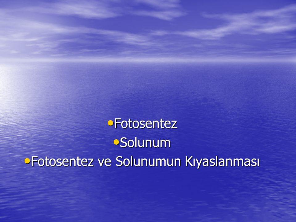 Fotosentez ve Solunum Fotosentez ve Solunum