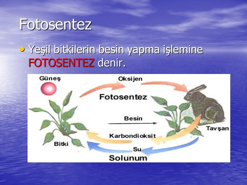 Fotosentez Fakat yeşil bitkiler kendi besinlerini kendileri yapar.
