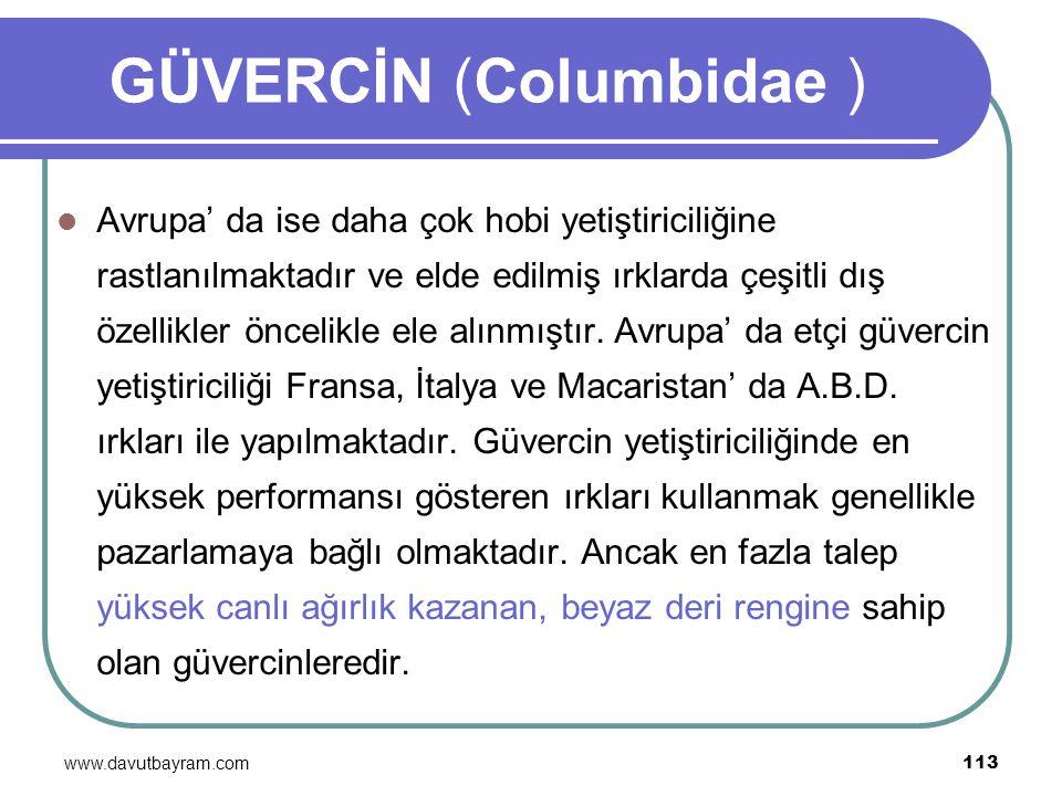www.davutbayram.com 113 GÜVERCİN (Columbidae ) Avrupa' da ise daha çok hobi yetiştiriciliğine rastlanılmaktadır ve elde edilmiş ırklarda çeşitli dış ö