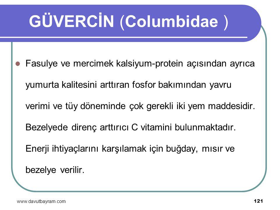 www.davutbayram.com 121 GÜVERCİN (Columbidae ) Fasulye ve mercimek kalsiyum-protein açısından ayrıca yumurta kalitesini arttıran fosfor bakımından yav