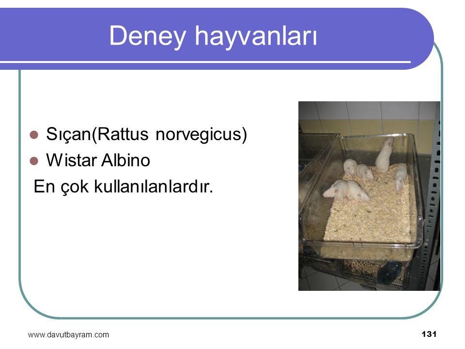 www.davutbayram.com 131 Deney hayvanları Sıçan(Rattus norvegicus) Wistar Albino En çok kullanılanlardır.
