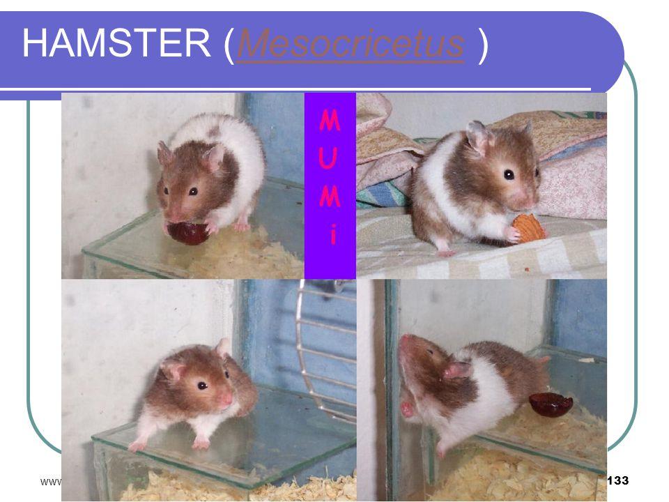 www.davutbayram.com 133 HAMSTER (Mesocricetus )Mesocricetus