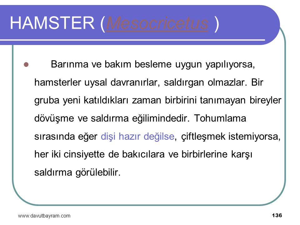 www.davutbayram.com 136 HAMSTER (Mesocricetus )Mesocricetus Barınma ve bakım besleme uygun yapılıyorsa, hamsterler uysal davranırlar, saldırgan olmazl