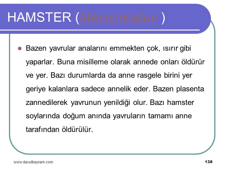 www.davutbayram.com 138 HAMSTER (Mesocricetus )Mesocricetus Bazen yavrular analarını emmekten çok, ısırır gibi yaparlar. Buna misilleme olarak annede