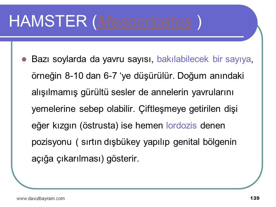 www.davutbayram.com 139 HAMSTER (Mesocricetus )Mesocricetus Bazı soylarda da yavru sayısı, bakılabilecek bir sayıya, örneğin 8-10 dan 6-7 'ye düşürülü