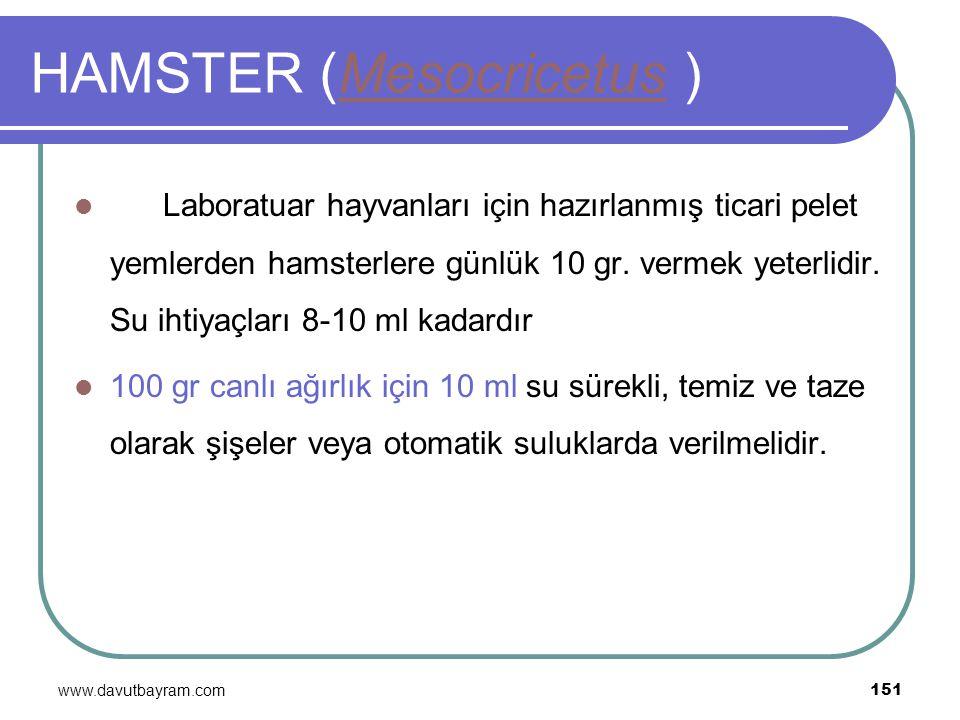 www.davutbayram.com 151 HAMSTER (Mesocricetus )Mesocricetus Laboratuar hayvanları için hazırlanmış ticari pelet yemlerden hamsterlere günlük 10 gr. ve