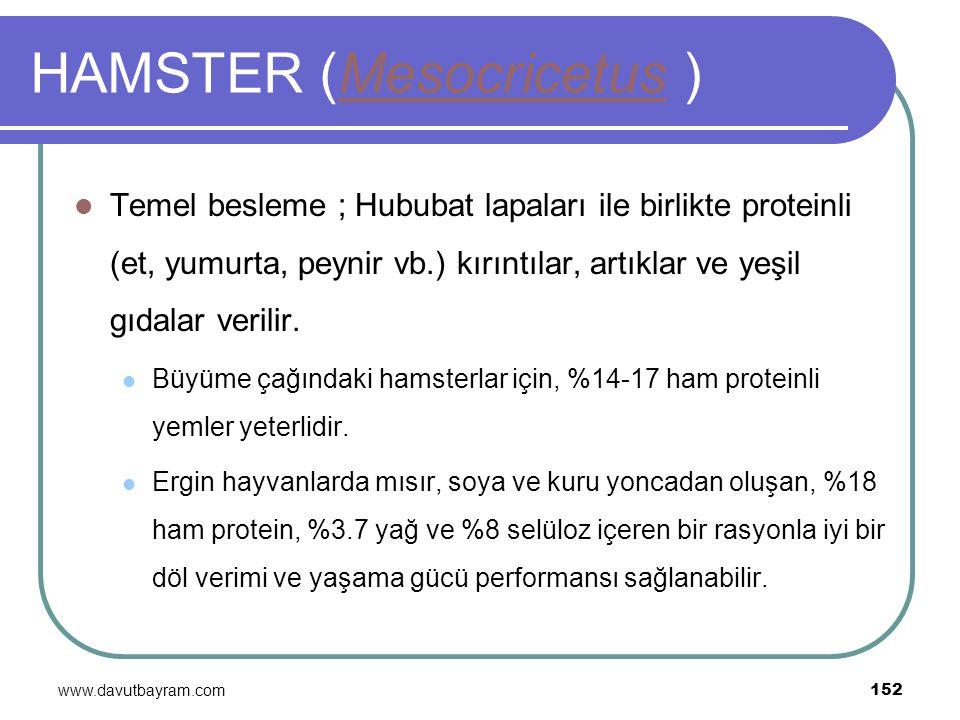 www.davutbayram.com 152 HAMSTER (Mesocricetus )Mesocricetus Temel besleme ; Hububat lapaları ile birlikte proteinli (et, yumurta, peynir vb.) kırıntıl
